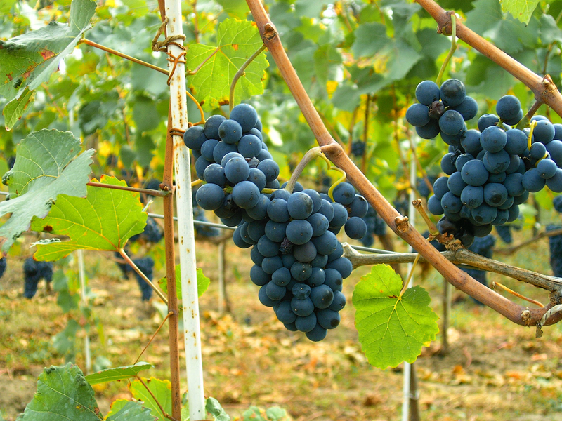 Introduction to Red and White Wines